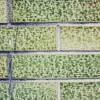外壁塗装のカビや苔のメンテナンスは重要