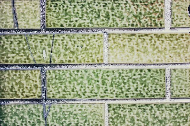 外壁塗装のカビや苔